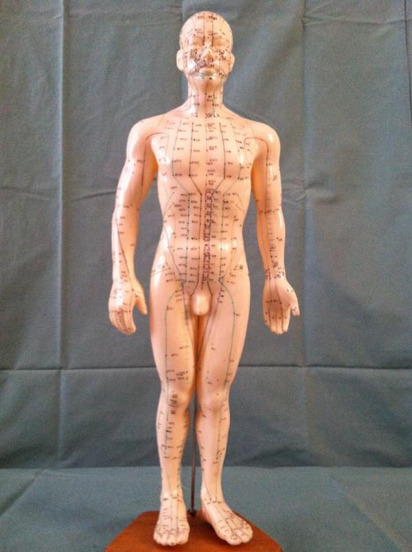 meridians, body, front